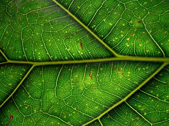 leaf-1190227-1280x960